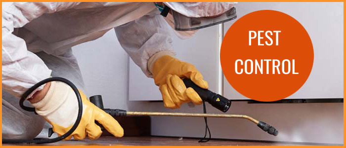 Pest Control Browns Plains