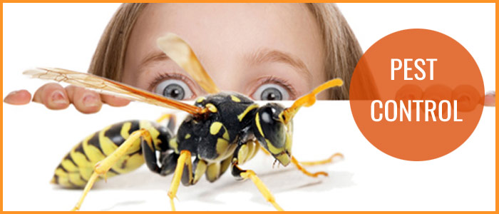 Best Pest Control Browns Plains