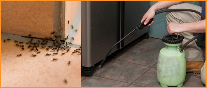 Expert Pest Control Coal Creek